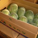 cabbage_product