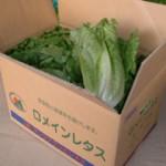 leaflettuce_product